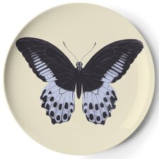 Metamorphosis Coaster (Set of 4)
