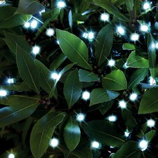 Light Fairy Lights
