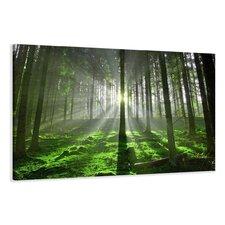 Guadalupe Ridge Forest Clearing Photographic Print on Canvas