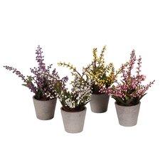 4-tlg. Heidepflanzen-Set