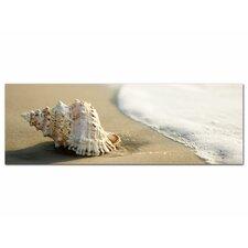 Glasbild Muschel, Sand, Wasser, Meer Fotodruck