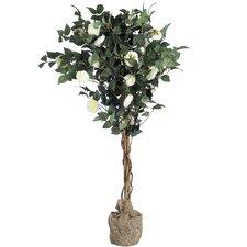 Chinarosenbaum