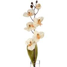 3-tlg. Orchidee