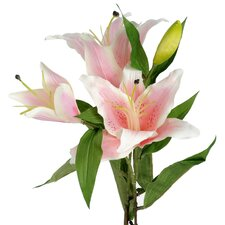 Lily Plant (Set of 2)