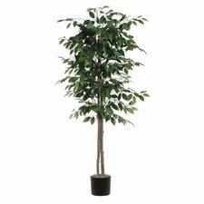 Berry Ficus Tree in Pot