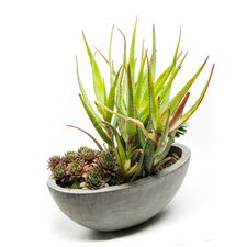 Alecto Pot Planter
