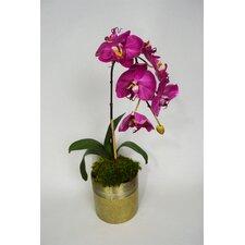 Orchid Floral Arrangement