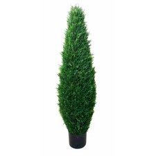 Cypress Tree in Pot