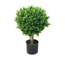 Hedyotis Topiary in Pot (Set of 2)