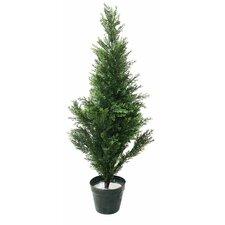 Cedar Topiary in Pot (Set of 2)
