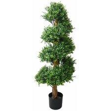 Green Boxwood Tree in Pot
