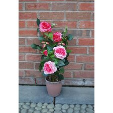 Damask Rose with Terra Pot