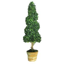 Twisted Bay Tree Round Tapered Topiary in Pot