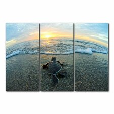'Turtle' by Christopher Doherty 3 Piece Photographic Print on Wrapped Canvas Set