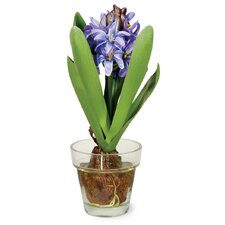 Hyacinth in Glass Pot (Set of 2)