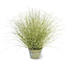 Zebra Grass in Round Metal Pot