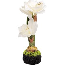 Decorative Tall Amaryllis
