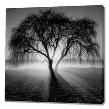 Lighting Tree by Moises Levy Photographic Print on Wrapped Canvas
