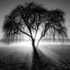 Lighting Tree by Moises Levy Photographic Print