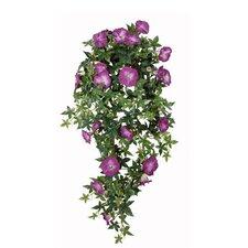 Hängepflanze Petunie