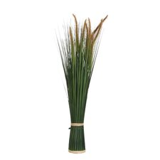 Plume Grass Plant in Plastic Pot