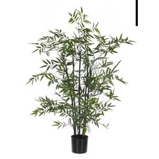 Bamboo Tree in Plastic Pot