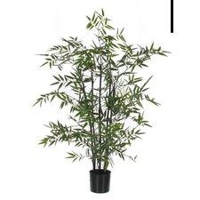 Bambusbaum im Topf