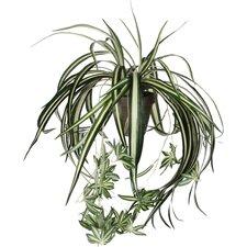 Pflanze Grünlilie im Blumentopf