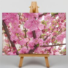 Prunus Persica Flower Photographic Print on Canvas