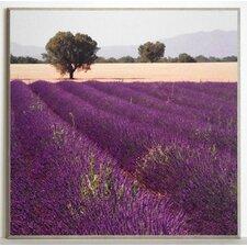 Kunstdruck Lavendel Ansicht 2 - 51 x 51 cm