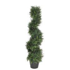 Brown Cedar Spiral Topiary in Pot