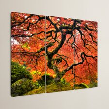 'Japanese Maple Tree' by John Black 3 Piece Photographic Print on Canvas Set