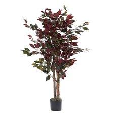 Bush Tree in Pot