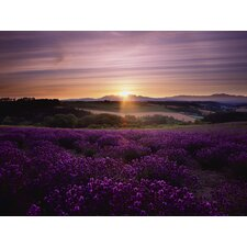 Lavendar Sunset Art Photographic Print on Canvas