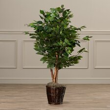Kidwelly Artificial Potted Natural Ficus Tree in Basket