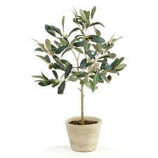 Olive Tree in Pot (Set of 2)
