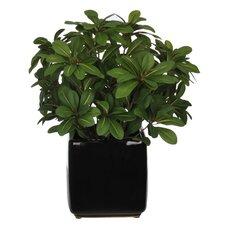 Artificial Desk Top Plant in Pot
