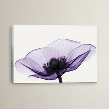 Anemone II by Robert Coop Graphic Art on Wrapped Canvas