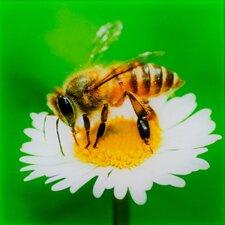 Glasbild Biene Fotodruck
