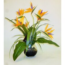 Bird Of Paradise Planted Vase
