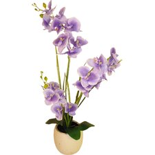 Phalaenopsis Orchid and 3 Embossed