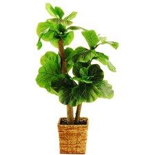 Mini Fiddle-Leaf Fig Tree in Basket