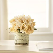 Adelaide Hydrangea in French Labeled Pot