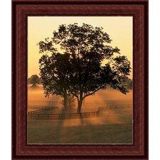 'Morning Splendor' by Adam Jones Framed Photographic Print