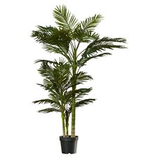 Brookings Cane Palm Tree in Pot