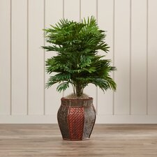 Brookings Areca Palm Floor Plant with Decorative Vase