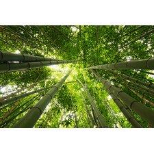 Acrylglasbild Bamboo