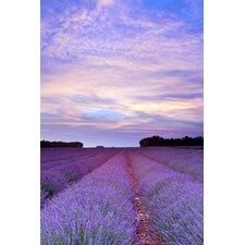 Acrylglasbild Lavender, Fotodruck