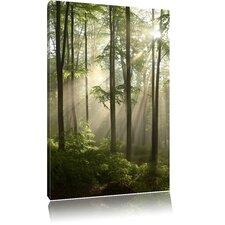 Leinwandbild Wunderschöner Lichtfall durch dichten Wald