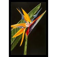 'Maui Bird of Paradise' by Karl Black Graphic Art